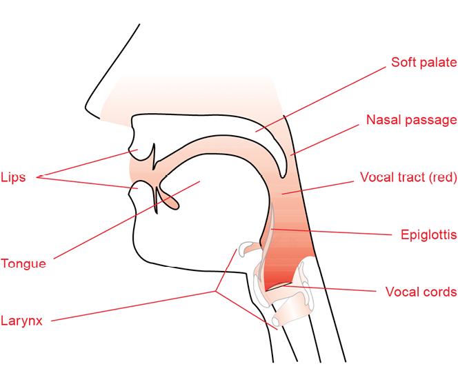 Complete Vocal Technique – Complete Vocal Institute
